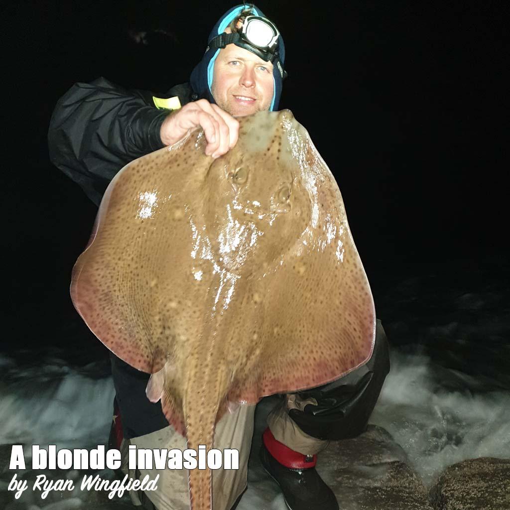 ryan wingfield blonde ray