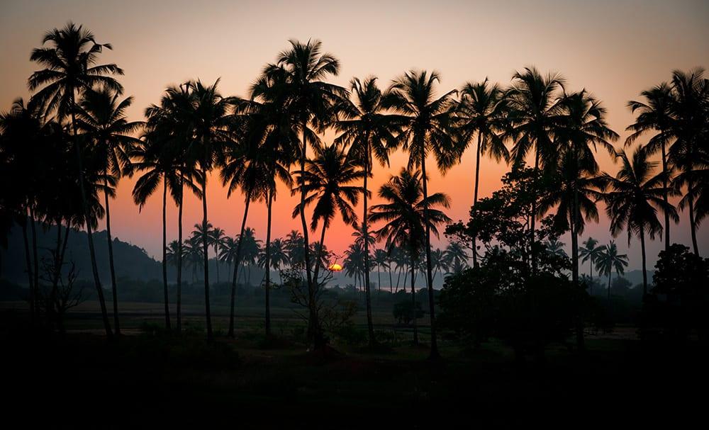 A sunset through the palms